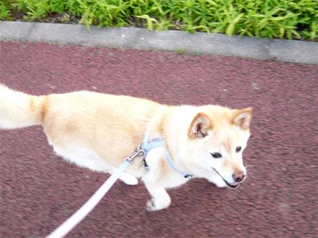 散歩ゴーゴー♪
