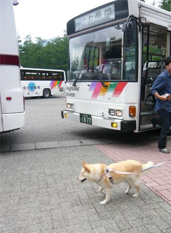 あたしはお宿のバスよ。