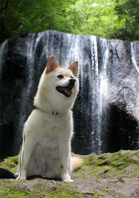 裏磐梯 滝