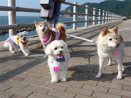 日本海を散歩