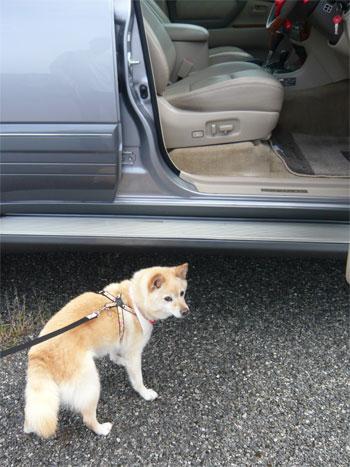 あ。犬の里親さんも、募集中!