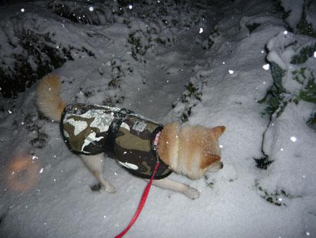 雪は七難隠す?