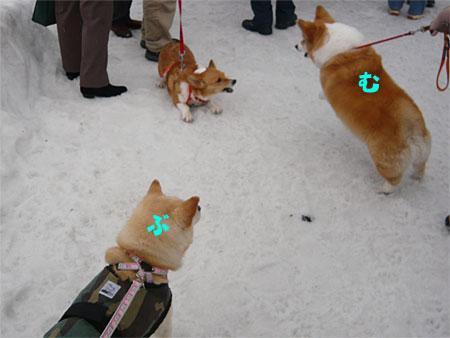 旅犬むぎちゃんと犬っこまつり