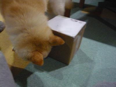 この箱、あやしいわ。