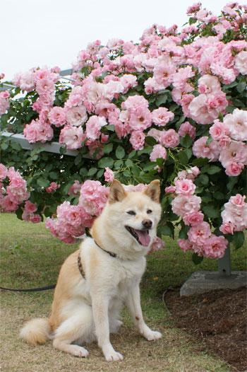 あたしは、ピンクかな〜♪