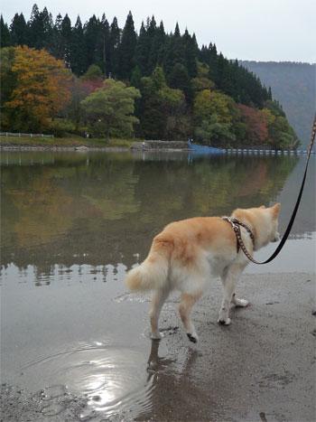 犬だけど猫背