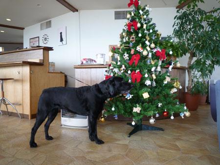 犬も立つ12月。
