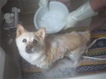 湯けむり美犬よ。
