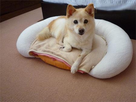 これがベッド?