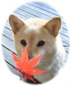 キツネ目の犬